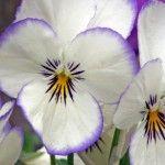 φυτα λουλουδια