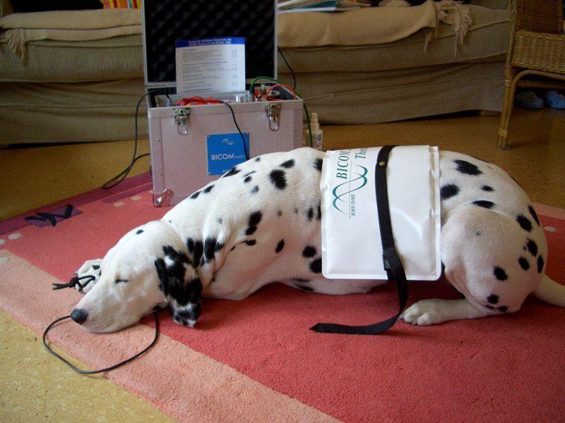 Κτηνιατρικη χρηση